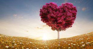 ده باور اشتباه درباره عشق