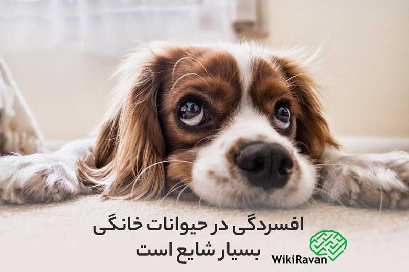 افسردگی حیوانات چیست