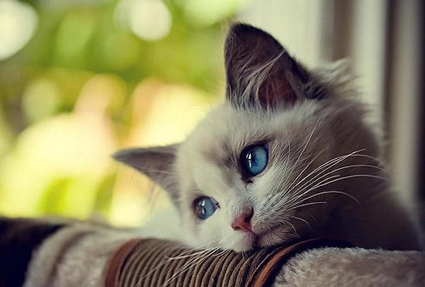 افسردگی در حیوانات