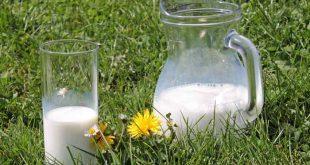 مضرات شیر غیر پاستوریزه در کودک ها