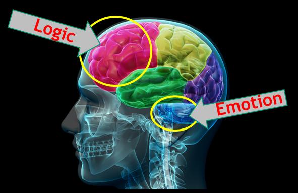 حالت های هیجانی مغز