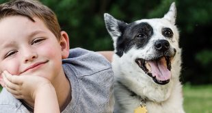 سگ و پسربچه
