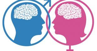 مغز مردها