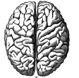 تعامل دو نیمکره مغز در درک احساسات