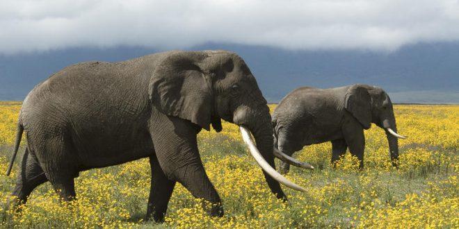 فیلها خاطرات را فراموش نمیکنند