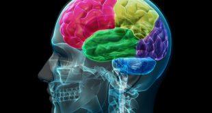 مغزتان را قوی کنید