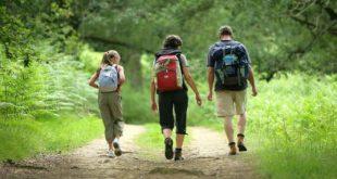 پیاده روی و پرورش هوش