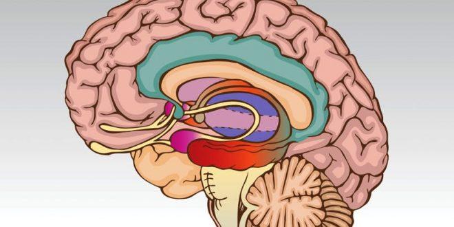 تغییر ساختار مغز با افسردگی