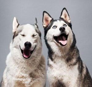 سگ های باهوش