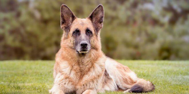 میزان هوش سگ ها