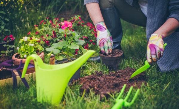 کسب و کار باغبانی