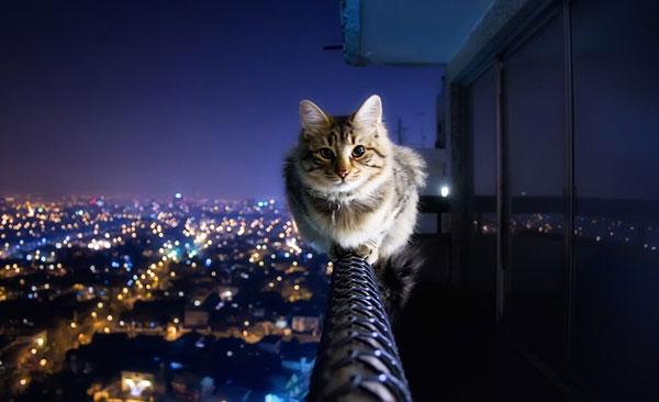 ارتفاع-گربه