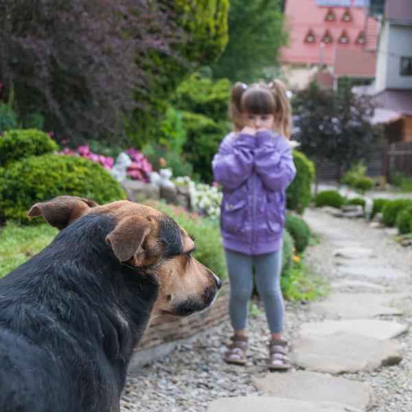 درمان-ترس-از-سگ
